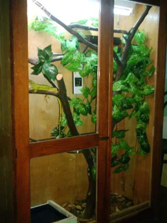 Legwanzielonycom Legwan Zielony Iguana Iguana Rhinolopha